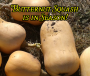 What British Food is in Season? The Butternut Squash!